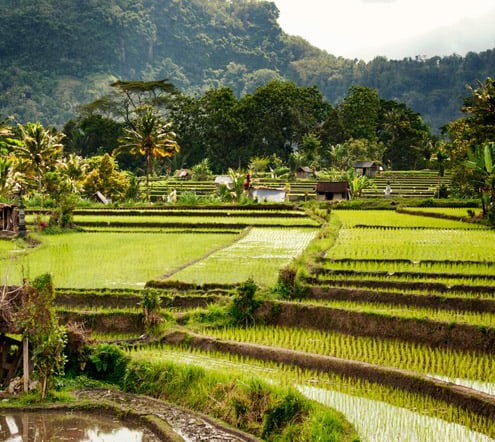 Unesco World heritage site, the rice terraces at Tegalalang.